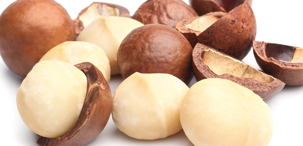 macadamia, oil of the macadamia nut, more suppleness, natural ingredients, essential, natural haircare, quality